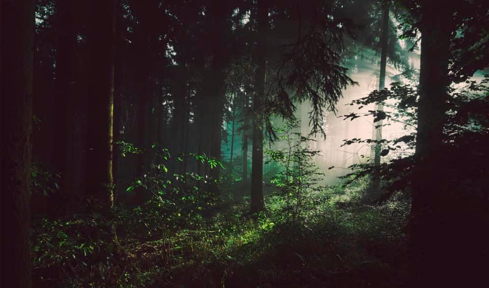 Il bosco nelle fiabe | F.Carubbi Psicoterapeuta Fano | Re.Te 4.0 - Amori 4.0