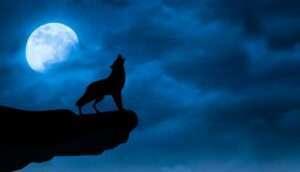 Il lupo nel buio: le storie sono amiche delle paure| Amori 4.0 | Carubbi